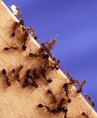 Plagas del hogar control tico ecosof a - Plaga hormigas en casa ...