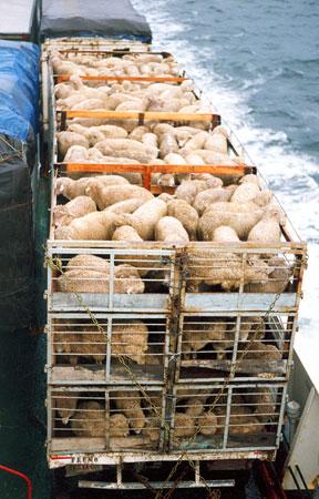 (Transporte de animales por camión y mar)