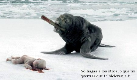 external image foca_matando_humano.jpg