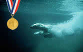 Animales Olimpicos!
