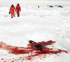 Los cazadores Seal_canada_2009