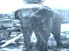 Sentenciados a muerte: los juicios contra animales no humanos | F.A.L.