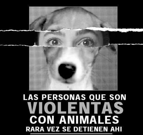 Crueldad con los animales por qu se da y c mo evitarla - Es malo banar mucho a los perros ...